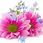 Вірші про квіти