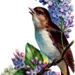 Вірші про птахів