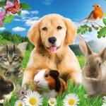 Загадки про тварин