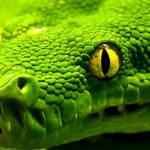 Зелена змія