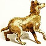 Хитрий Петр убиває собаку