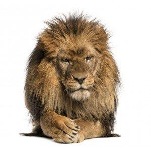 Як чоловік і кінь перехитрили лева