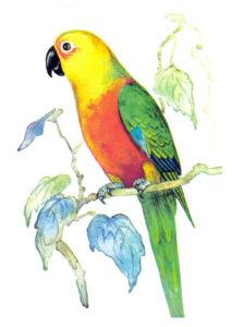 Як папуги купця ошукали