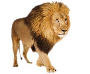 Лев, миша і людина
