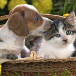 Чому миші, коти й собаки між собою не миряться