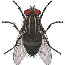 Як селянин муху вбив