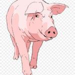 Бійка вовків із свиньми